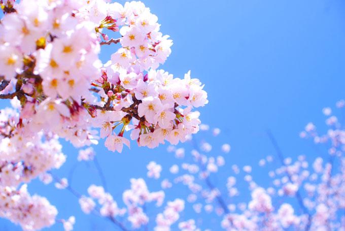 大阪 街コン お花見