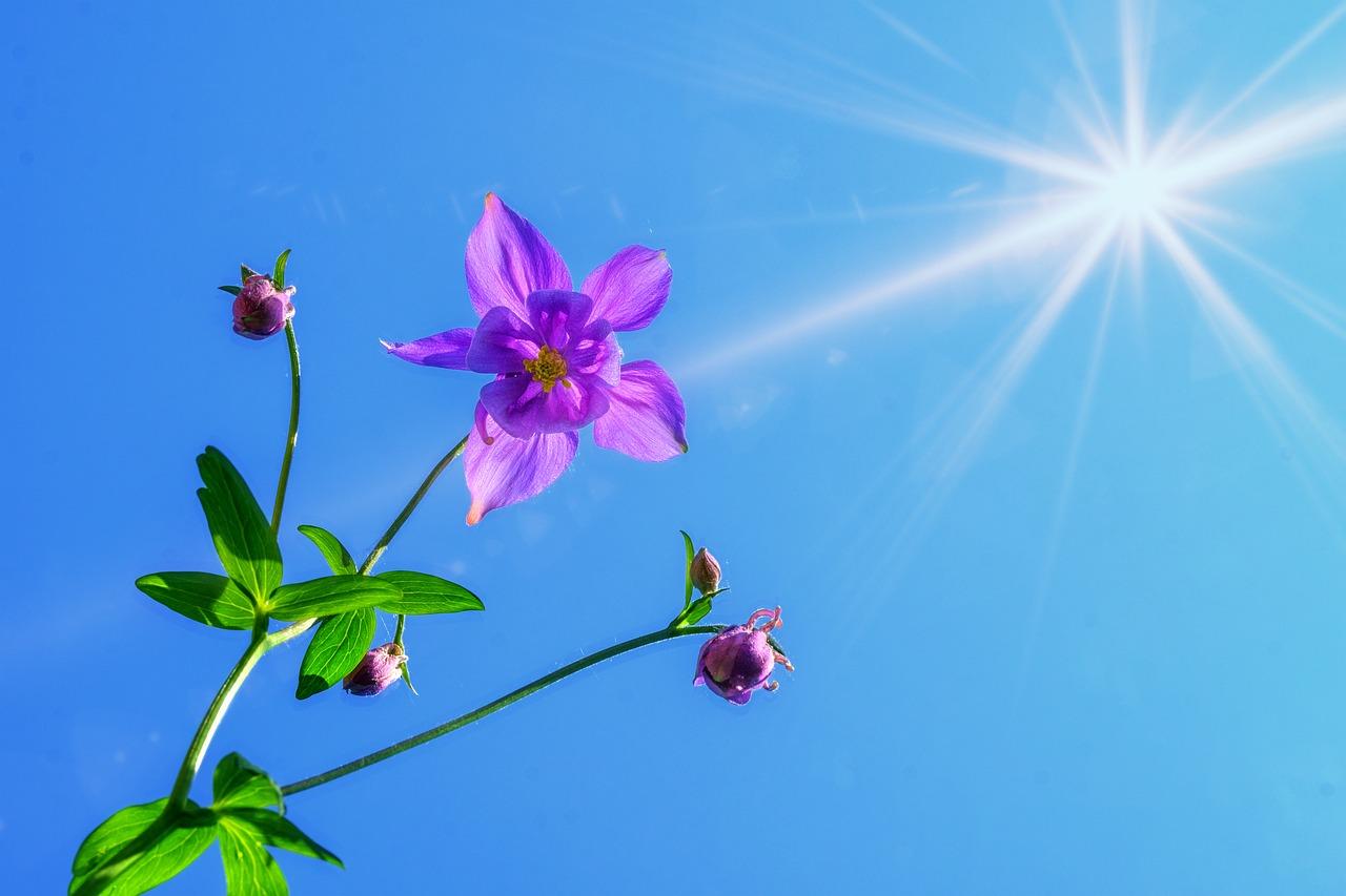 快晴の空と花