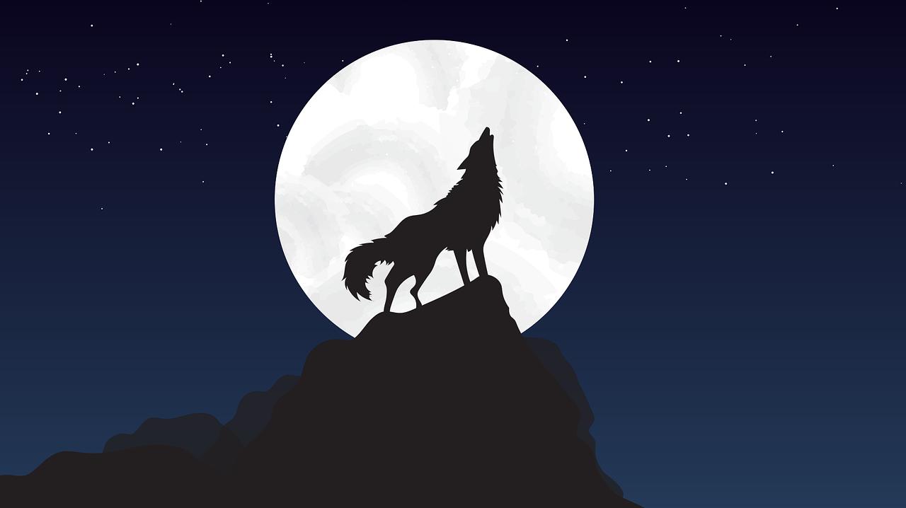 月に向かって吠える狼
